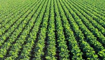 फसल उत्पादन के लिए किसानों को मिलेगा आर्थिक सहयोग