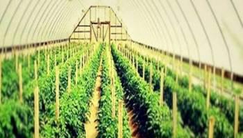 उद्यानिकी फसल लेने वाले किसान 15 जुलाई तक करा सकते हैं बीमा