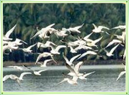 Kumarakam Bird Sanctuary