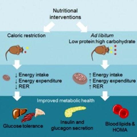 diet, protein, karbohidrat