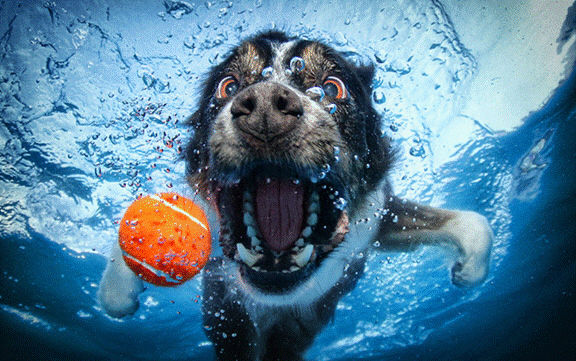 Dogs in water2