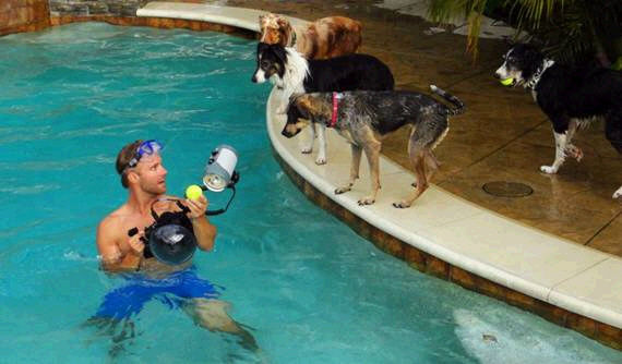 dogs in water17