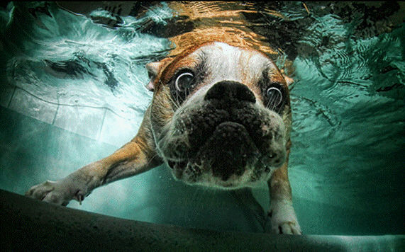 dogs in water6