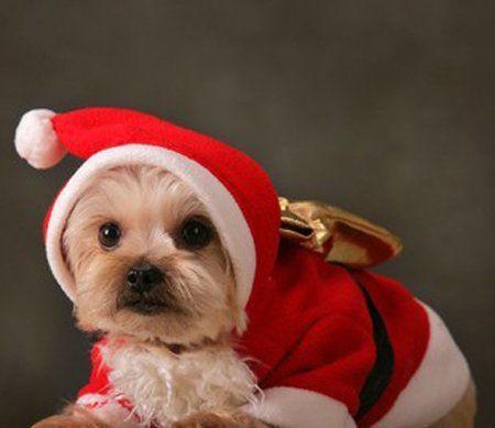 Pet-Christmas-