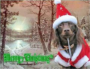 Pet-Christmas8