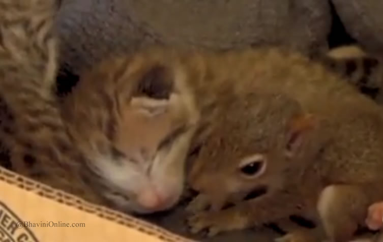 Baby Squirrel Adopted By Cat