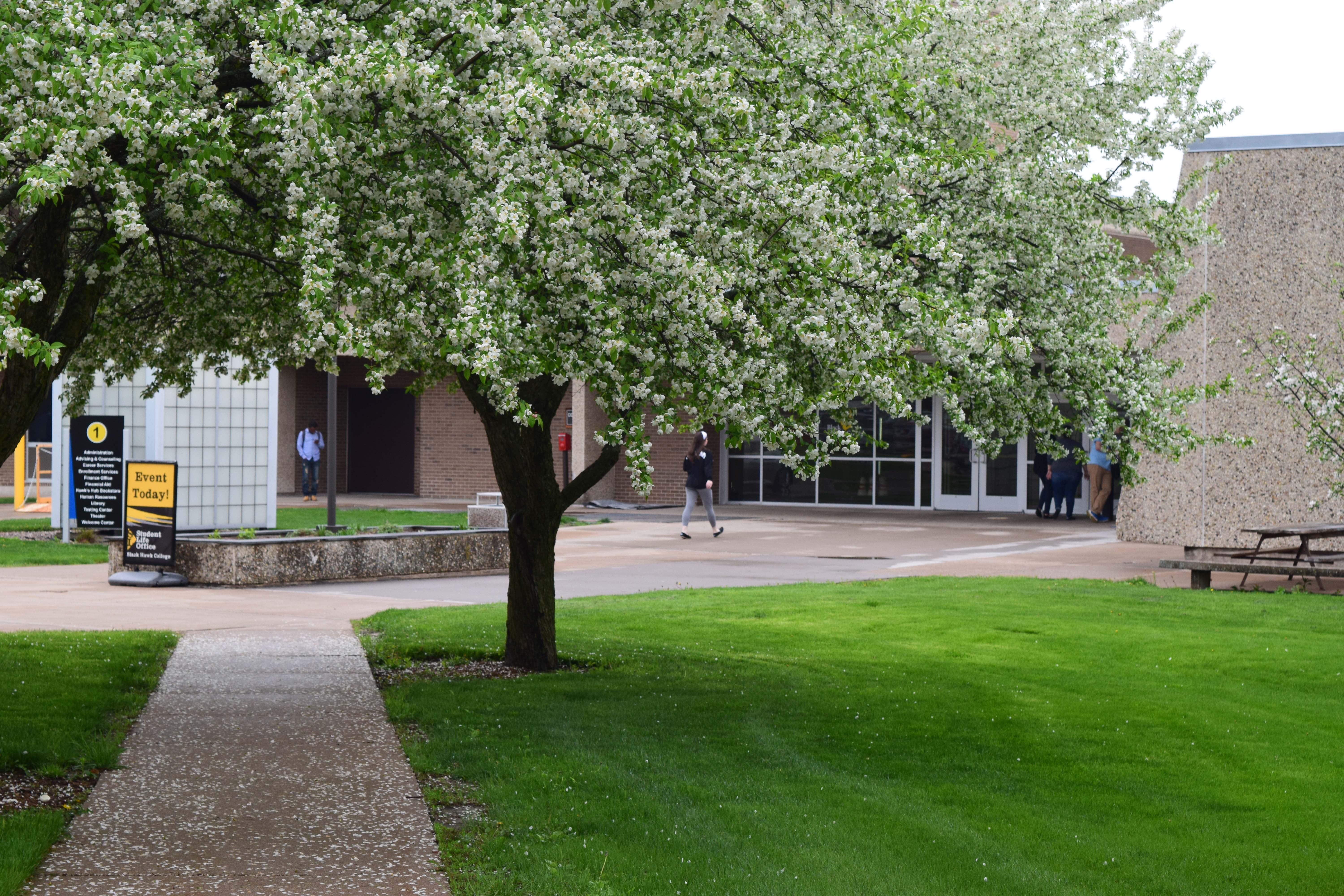 Quad-cities campus pathway in spring time