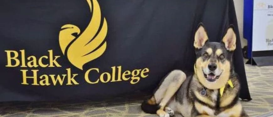 Dog posing in front of veterinary services banner