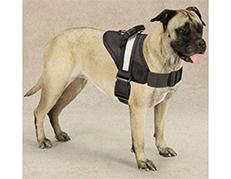 Designer Style Pet Harness