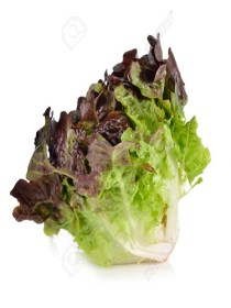 Lettuce Oakleaf Red (250g)