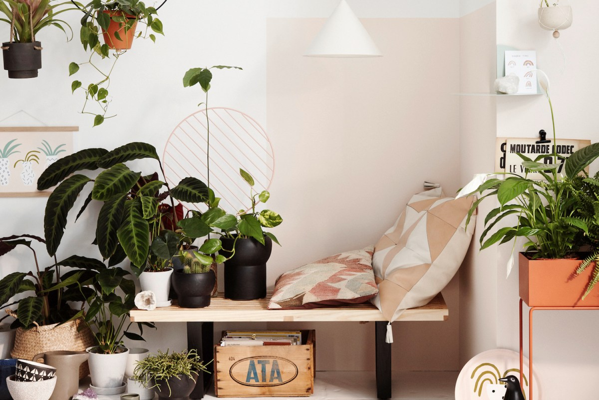 plants indoor house