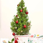 Get A Gorgeous Real Life Mini Christmas Tree Delivered To Your Door Better Homes And Gardens