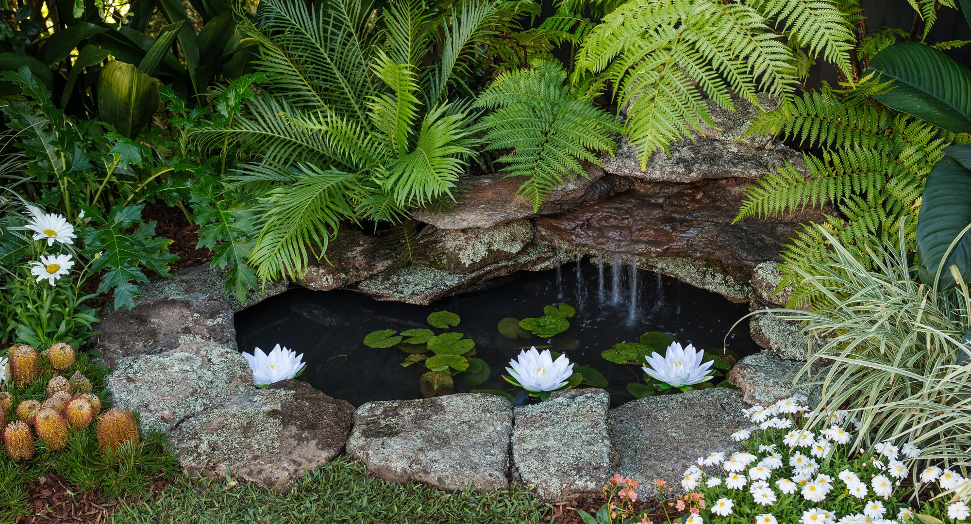Best Water Plants Small Ponds