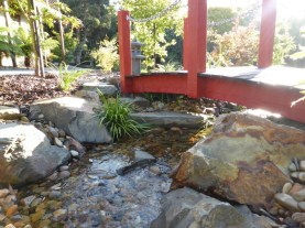 Japanese stream in Eltham flowing under red Japanese style timber bridge.