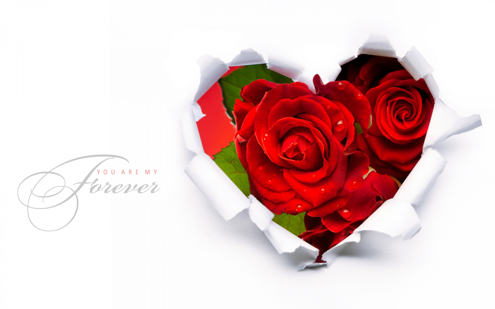 Red Roses In A Heart Shape Wallpapers 1920x1200 305216