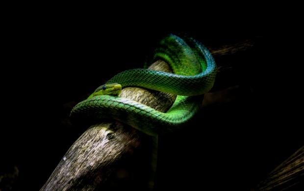 Dark Snake Wallpapers