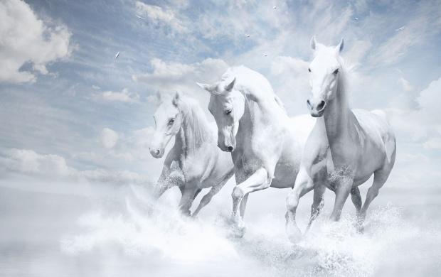 running horse wallpaper high resolution wallpaper images