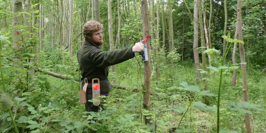Herplanting bomen na kap wegens essentaksterfte