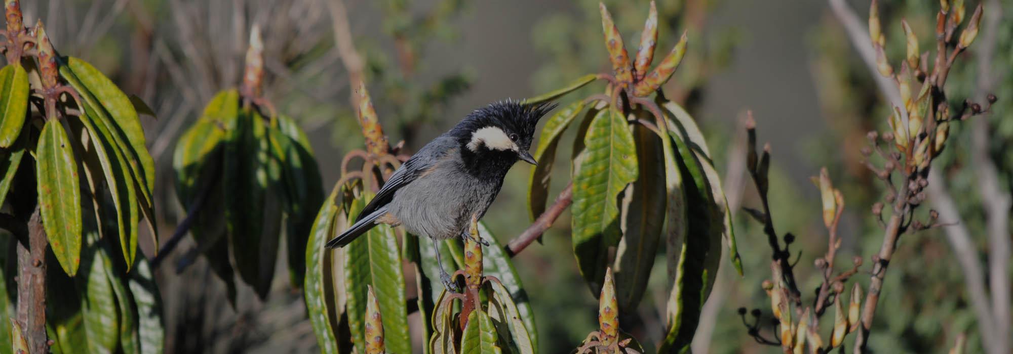 Bhutan Endangered Bird Watching
