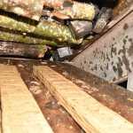 Papierosy w drewnie nie wjechały do Polski
