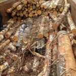 Ujawnienia papierosów dzięki skanerowi RTG