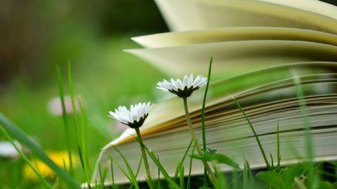 La Bibbia sulla terra con i fiori.