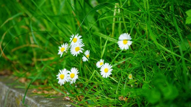 La vita testarda dell'erba è testimone del dio