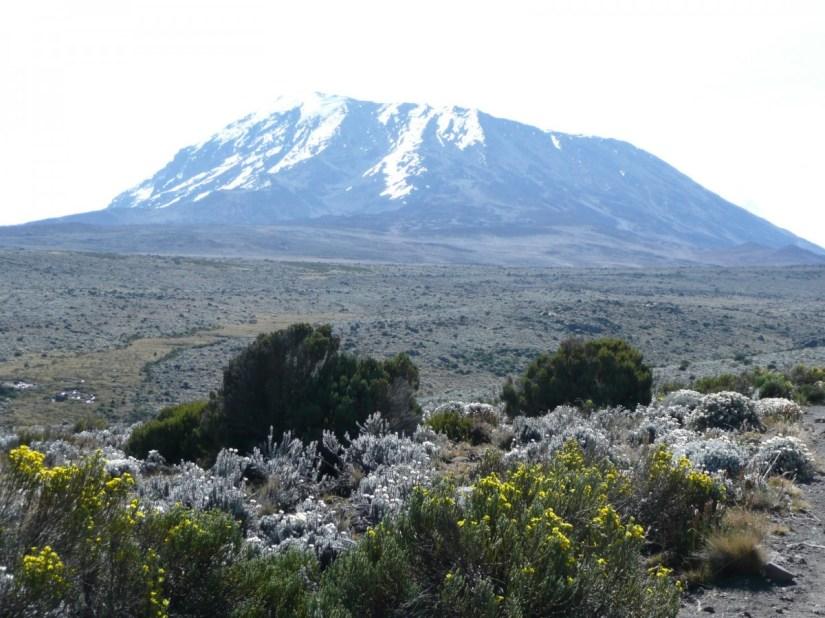 Image result for mount kilimanjaro tanzania