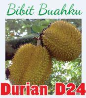 Bibit Durian d24