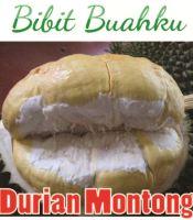 Bibit Tanaman Durian Montong