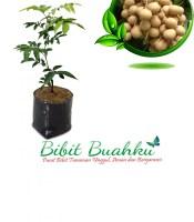 Bibit Tanaman Lengkeng Aroma Durian