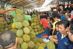 Jenis Durian Unggulan Yang Cocok Untuk Dibudidayakan
