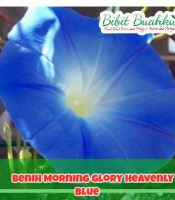 gambar Benih Morning Glory Heavenly Blue