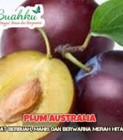 gabar buah plum australia