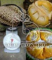 gambar buah durian bawor