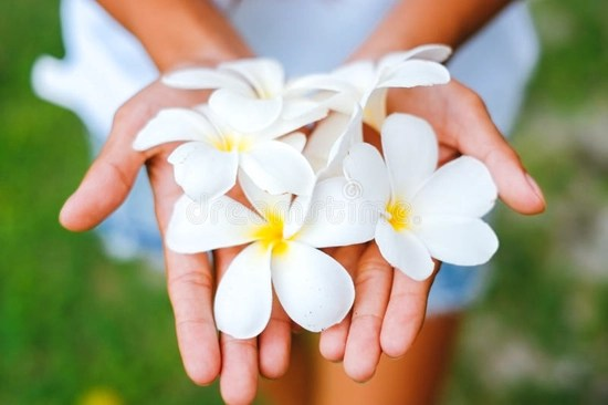 Forgiveness - hand offering flowers