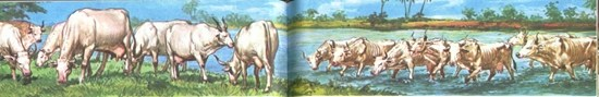 Seven thin cows coming out of the water about to swallow the seven healthy cows - Unknown artist