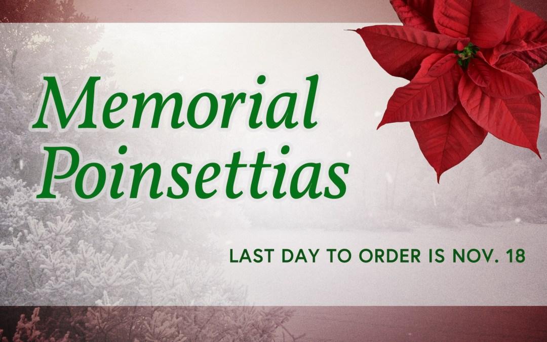 Memorial Poinsettias