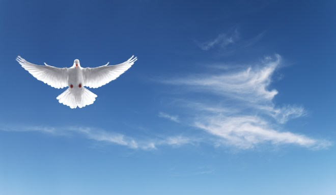 White Holy Dove flying in the sky panoramic view