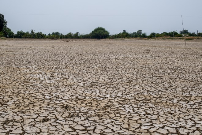 Crack soil on dry season Global warming / cracked dried mud / Dry cracked earth background / The cracked ground Ground in drought Soil texture and dry mud Dry land.