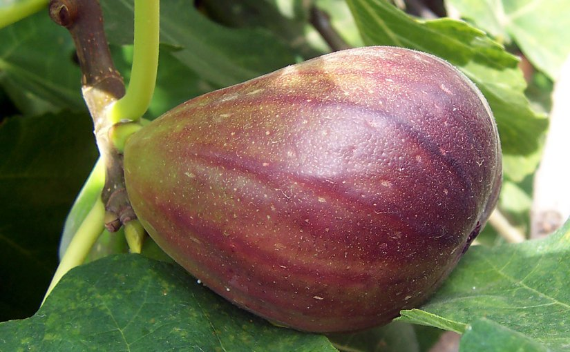 The Parable of the Fig Tree (Part 2)