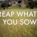 """You Reap What You Sow"": Violence in the Old Testament Part 6"