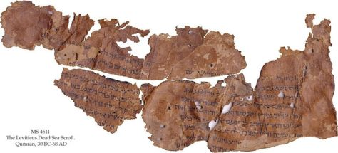 This new Dead Sea scroll fragment is from the Book of Leviticus. Credit: copyright The Schøyen Collection, Oslo and London, MS 4611.