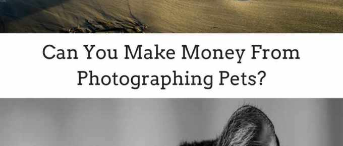 Pet Photography - Can you make money photographing pets