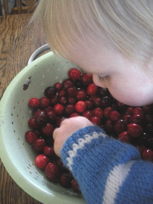 Little Missy and cranberries