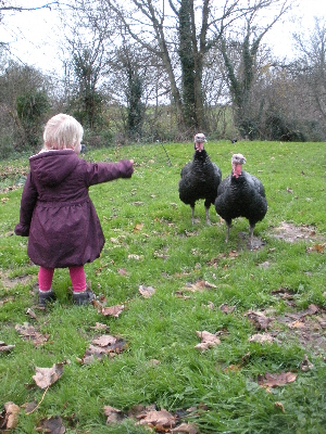 Little Missy and our Bronze turkeys