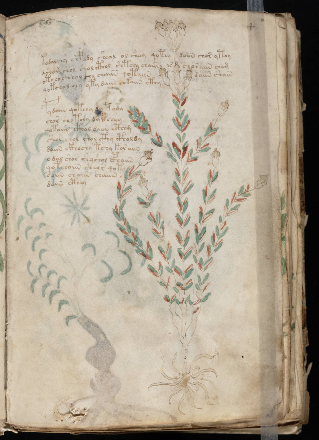 The Voynich Gallery The Complete Manuscript 1
