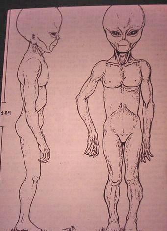 https://i2.wp.com/www.bibliotecapleyades.net/imagenes/montauk_alien_3.JPG