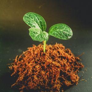 Egzotyczny parapet  – warsztaty i pokaz roślin tropikalnych