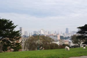 San Fransisco Painted Laidies